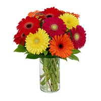 gerbera_weishes