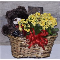 large_bear_basket